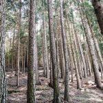 Dlaczego warto zdecydować się na aluminiowe drzewołazy?